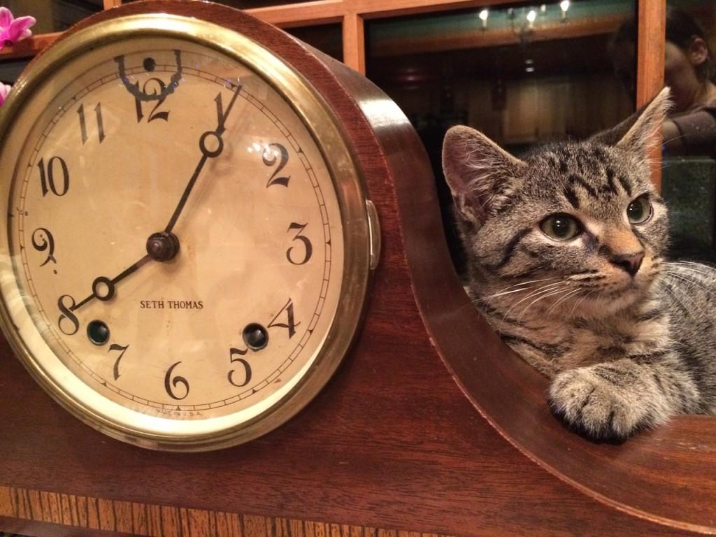 cat-1113330_1280