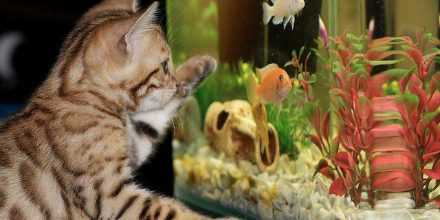 kitten-1154693_640